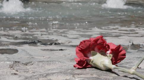 Una rosa en Sarajevo
